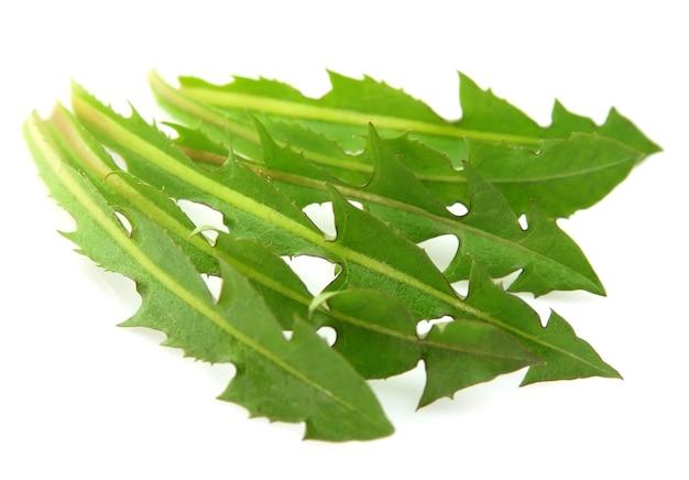 Сочные листы одуванчика крупным планом