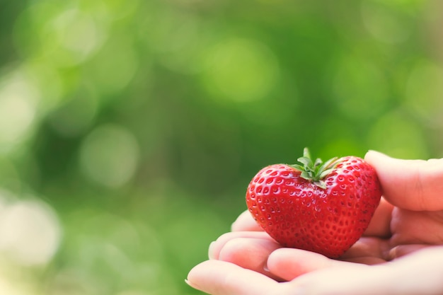 Juicy sweet strawberry on the palms. copy space