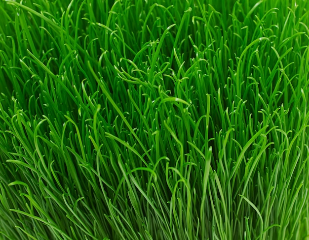 Juicy young green grass texture
