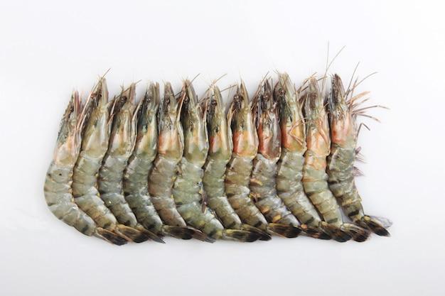 Jumbo raw shrimp are neatly lined up on a white minimalist surface