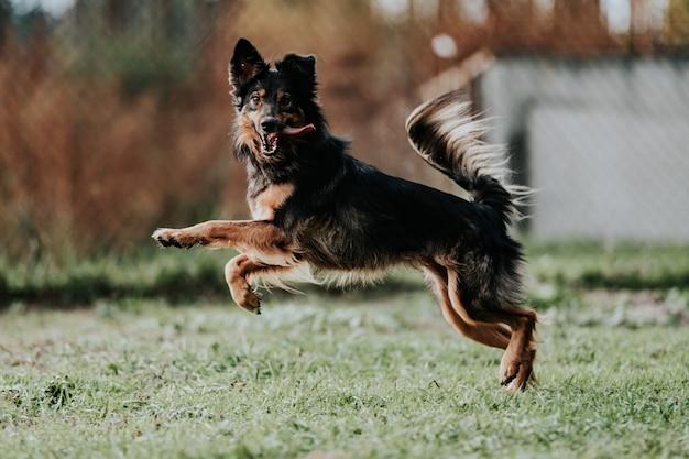 Прыгающая собака