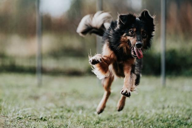 ジャンプ犬