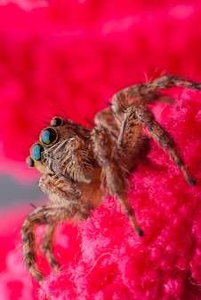 Jumping spider close up Premium Photo