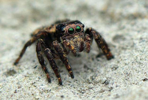 점프 거미 귀여운