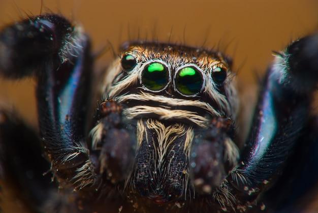 ハエトリグモの顔をクローズアップ。マクロ撮影