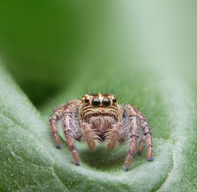 Jumping spider in nature
