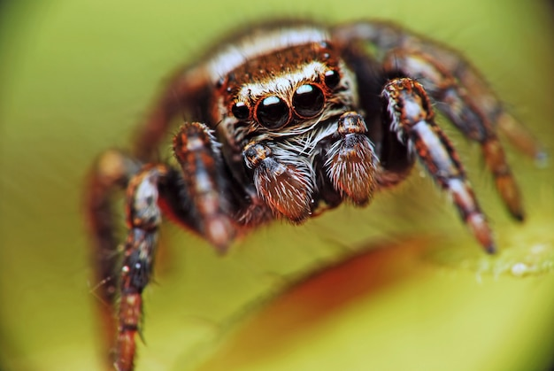 Прыжки паука на размытой природе в природе