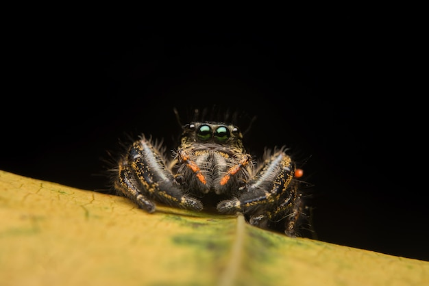 Jumping spider predator nature habitat