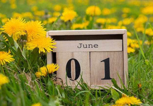 June 01, calendar organizer, the first day of summer on the green grass in yellow dandelions