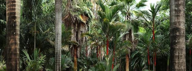 태국의 정글 배경