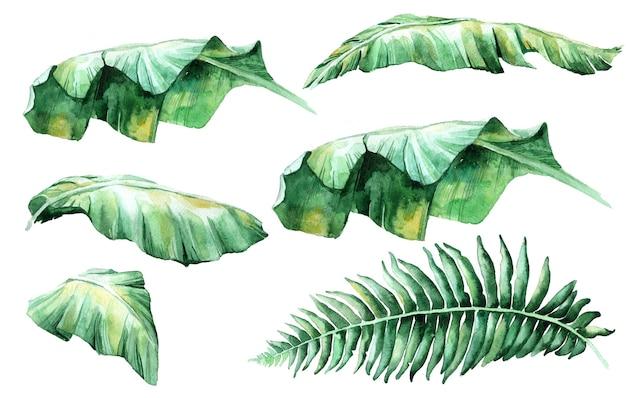 ジャングル、植物の水彩イラスト、花の要素、ヤシの葉、シダなど