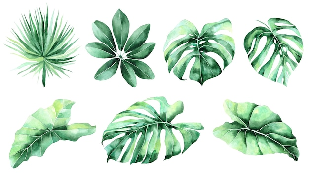 Jungle, botanical watercolor illustrations, floral elements, palm leaves, fern and others