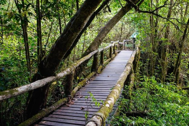 ジャングル橋