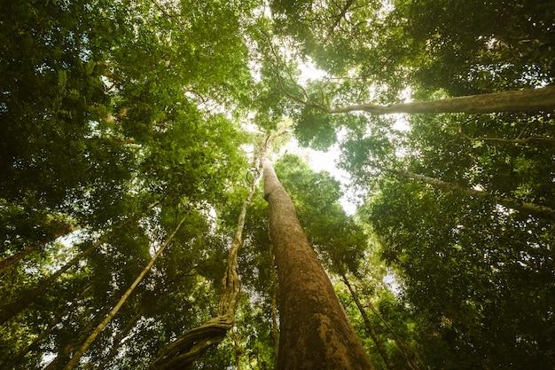 ジャングルの森。美しさの自然の風景