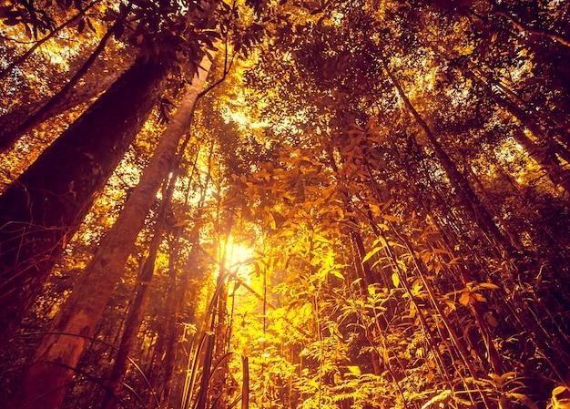 アジアのジャングルの森の熱帯の木々深い雨の中の美しい冒険自然の風景の背景
