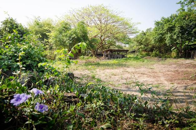 夏の間に小さな野生の花があるジャングルの森