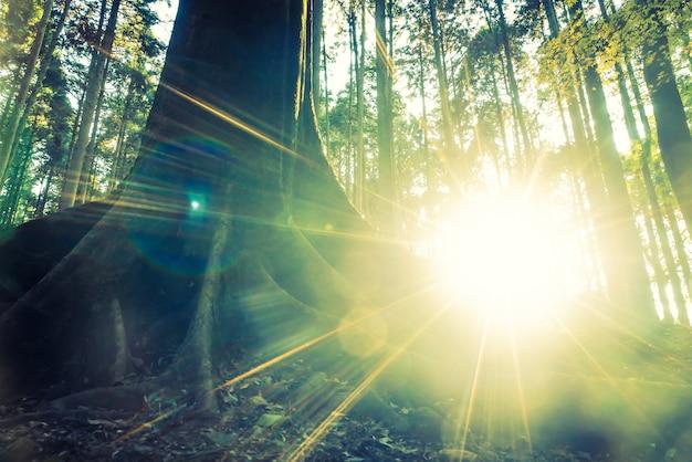 Лес джунглей