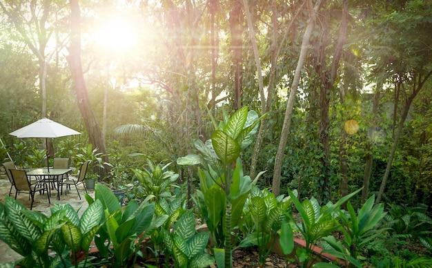 ジャングルの巨大なディフェンバキアサンメキシコヤード