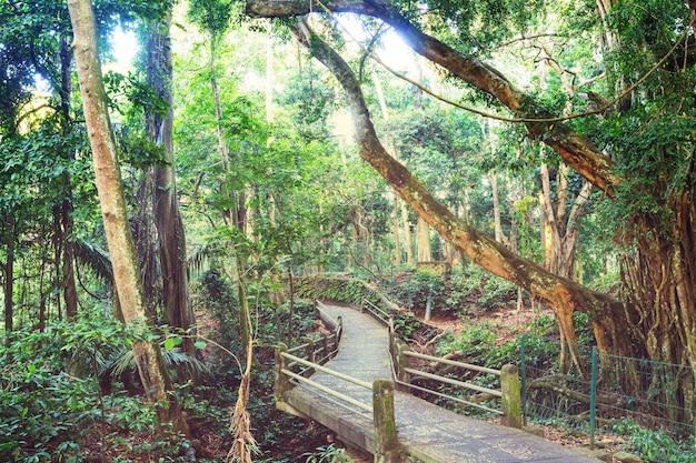 Jungle in hawaii