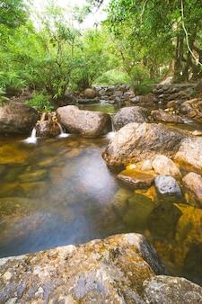 深い熱帯雨林に小川があるジャングルの風景