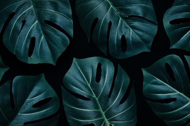 ジャングルの最小限の不機嫌そうなレイアウトの魔法のモンステラが創造的なパターンとして熱帯雨林に残します