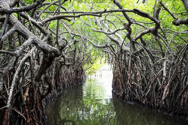 Река в джунглях и тропические мангровые заросли на цейлоне. шри-ланкийский пейзаж