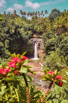 Jungle waterfall among tropical plants and flowers on bali island in indonesia