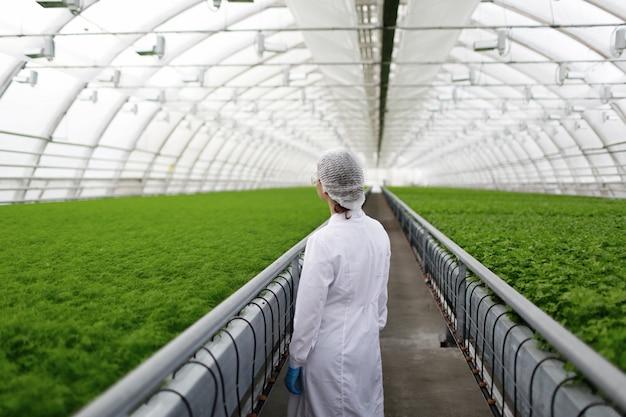 Младшие ученые-агрономы изучают растения и болезни в теплице с петрушкой