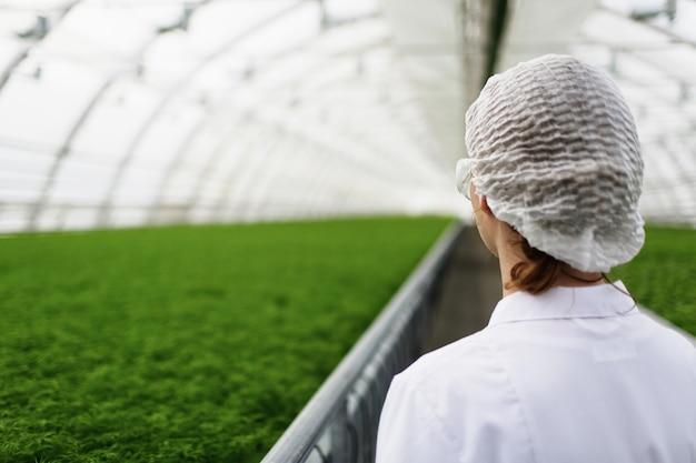 Scienziati agricoli giovani che ricercano piante e malattie in una serra con prezzemolo
