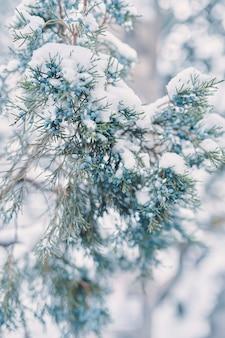 雪の針葉樹のヒノキの茂みのカナダトウヒのジュニパーベリーは、雪の降る天気の新年とキリスト...