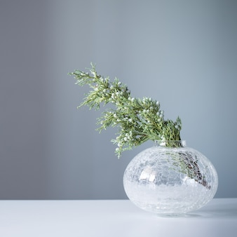 Ветки можжевельника в стеклянной вазе на сером фоне