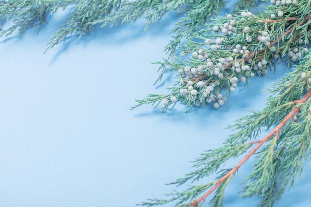 파란색 배경에 주니퍼 가지