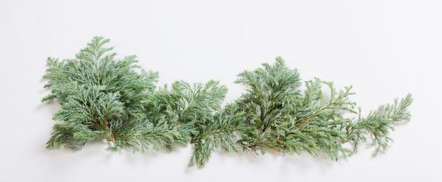 흰색 바탕에 주니퍼 가지