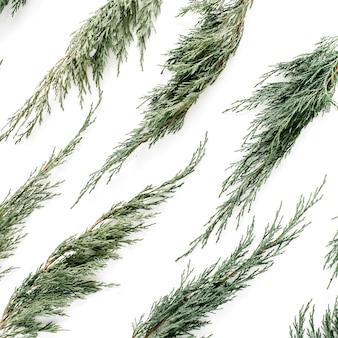 白い背景にジュニパーの枝パターン。フラットレイ、トップビュー
