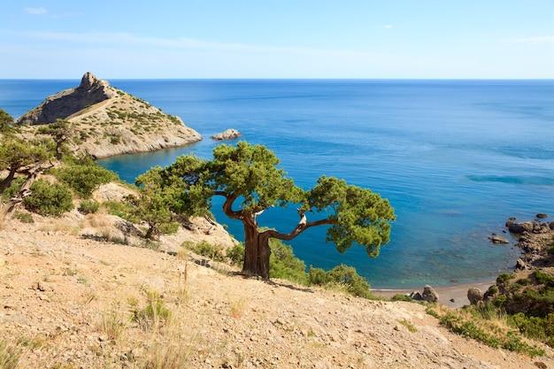 「capchik」ケープが後ろにある岩と海のジュニパーの木(「novyjsvit」保護区、クリミア、ウクライナ)。