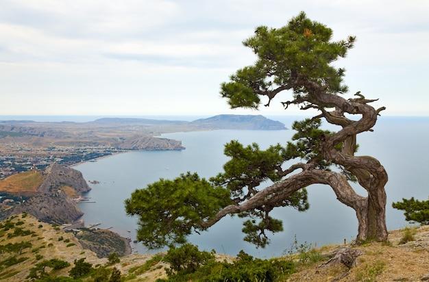 岩の上のジュニパーの木とスダク市の背景(クリミア、ウクライナ)。