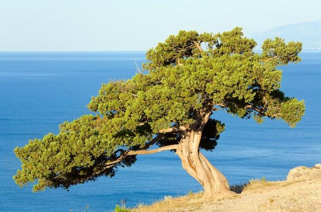 岩の上のジュニパーの木(「novyjsvit」保護区、クリミア、ウクライナ)。