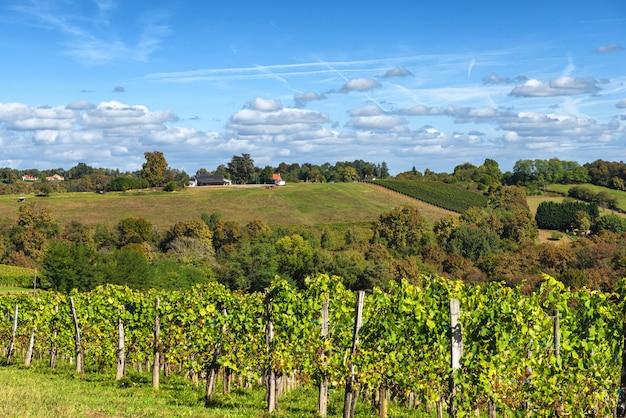 Виноградник вина jurancon во французских пиренеях