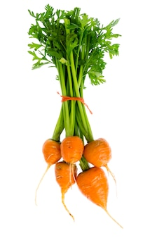 Just harvested round romeo carrots, isolated on white background.