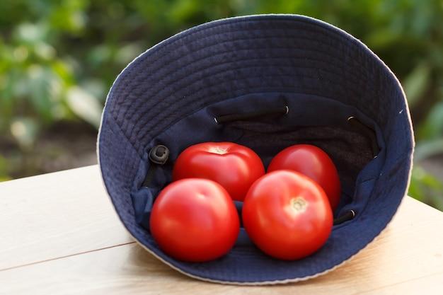 자연 배경에서 농부 모자에 토마토를 골랐습니다. 방금 수확한 야채입니다.
