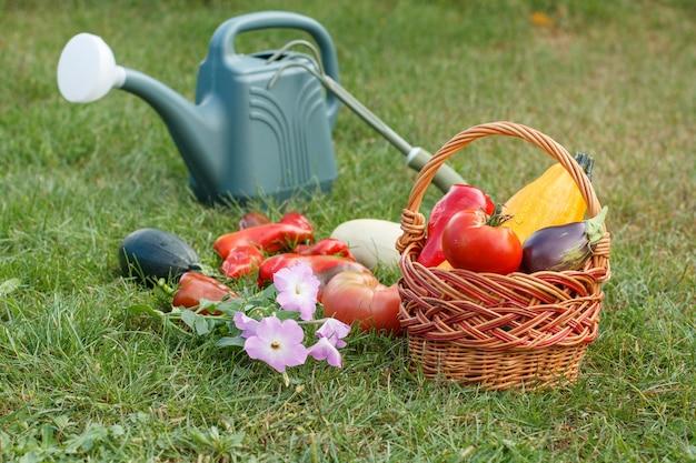 호박, 가지, 토마토, 피망을 고리버들 바구니, 갈퀴, 그리고 푸른 잔디에 물뿌리개와 함께 골랐습니다. 방금 수확한 야채입니다.