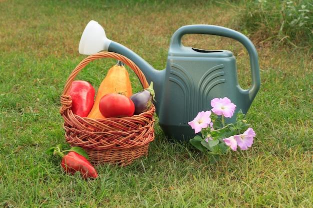 ズッキーニ、トマト、ピーマンを籐のかご、じょうろ、緑の芝生の上の花で摘みました。収穫したばかりの野菜。