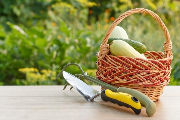 작은 손으로 정원 갈퀴와 흙손이 있는 고리버들 바구니에 호박과 오이를 골랐습니다. 방금 수확한 야채와 정원 도구.