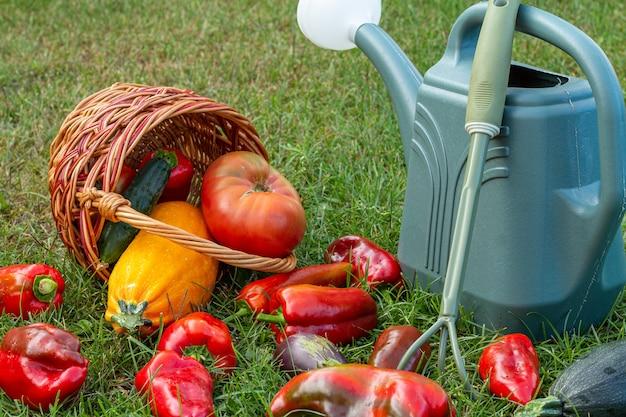 ズッキーニ、ナス、トマト、ピーマンを籐のかご、熊手、じょうろで緑の草の上に摘みました。収穫したばかりの野菜。