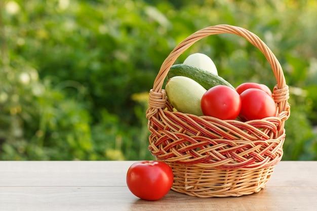 천연 녹색 배경의 고리버들 바구니에 호박, 토마토, 오이를 골랐습니다. 방금 수확한 야채입니다.
