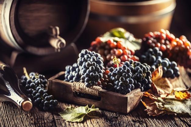잘 익은 포도는 나무 상자에 느슨하게 놓여 있고 배경에는 와인 배럴과 레드 와인 한 병이 있습니다.