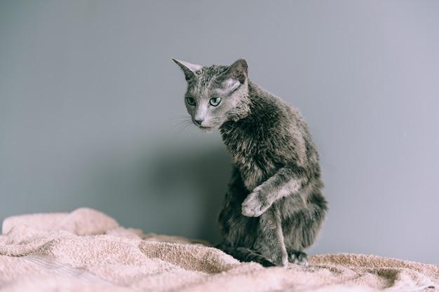 ただ面白い子猫を洗った