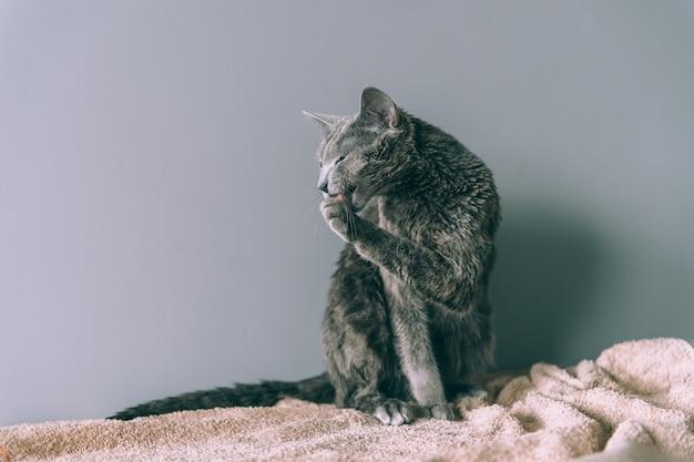 お風呂に座って濡れた子猫を洗った