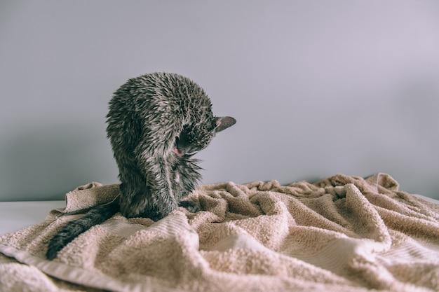 お風呂を舐めた後、濡れた子猫を洗っただけ