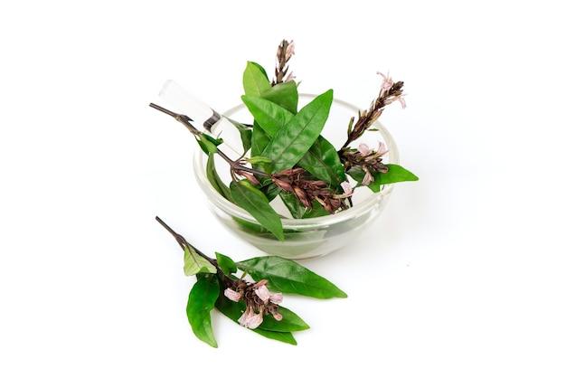 Цветы justicia gendarussa и зеленые листья, изолированные на белом фоне.